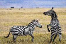 EBBenny-Rebel-Fotoworkshop-Tansania