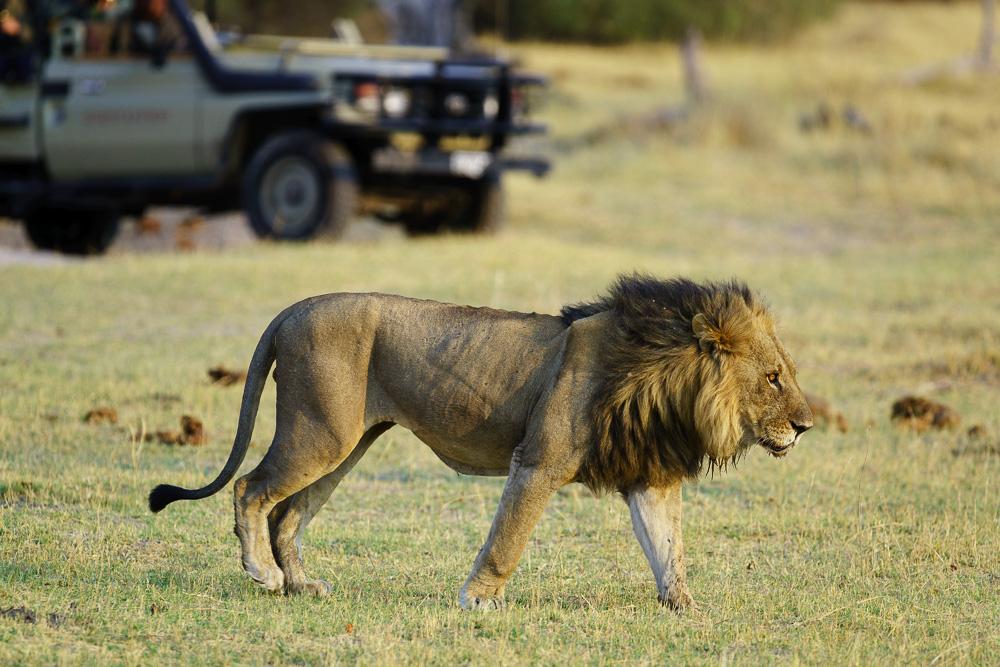 Fotoreise Kenia, Benny Rebel, Löwen