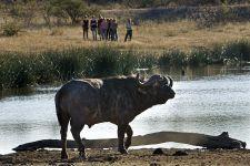 MCAB-Benny-Rebel-Fotoreise-Suedafrika-Walking-Safari