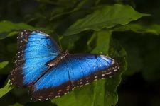 AAA-Benny-Rebel-Fotoworkshop-Costa-Rica-Schmetterling