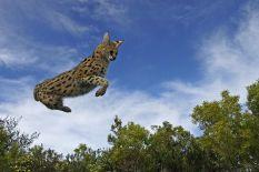 AAAD-Benny-Rebel-Fotoreise-Afrika-Serval