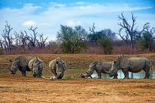 AF-Benny-Rebel-Fotoreise-Swaziland-Breitmaul-Nashorn