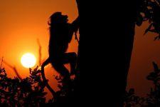 AK-Benny-Rebel-Fotoreise-Suedafrika-Pavian