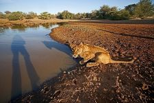 AKA-Benny-Rebel-Fotoreise-Suedafrika-Loewe