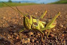 AN-Benny-Rebel-Fotoreise-Suedafrika-Grashuepfer
