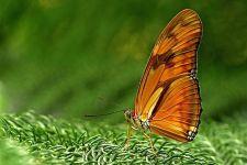 AN-Benny-Rebel-Fotoworkshop-Schmetterling
