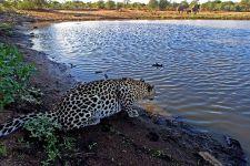 AO-Benny-Rebel-Fotoreise-Suedafrika-Leopard