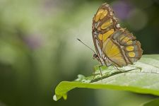 BTB-Benny-Rebel-Fotoworkshop-Costa-Rica-Schmetterling