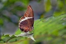 BV-Benny-Rebel-Fotoworkshop-Costa-Rica-Schmetterling