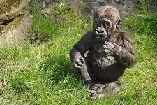 PAI-Benny-Rebel-Fotoreise-Gorilla