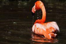 TKDB-Benny-Rebel-Fotoworkshop-Flamingo