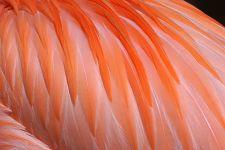 TKQA-Benny-Rebel-Fotoreise-Flamingo