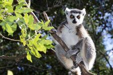 VQ-Benny-Rebel-Fotoreise-Lemur
