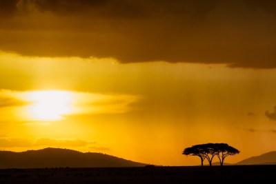 rain in the serengeti benny-rebel, fotografie, Foto, Druck, Kunst, Print, Regen