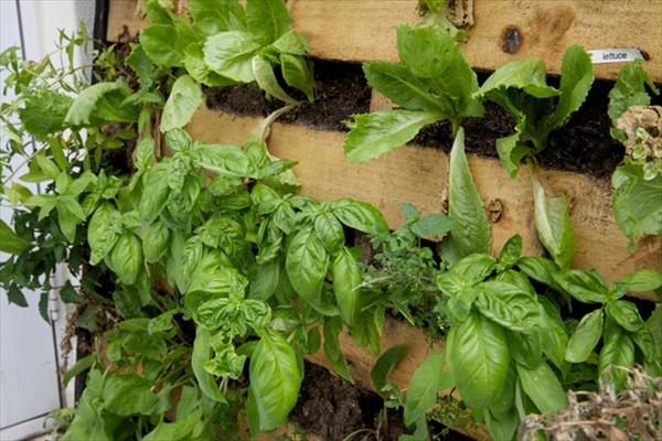 pallet-vertical-garden-wooden-pallet-garden-sofe-plans-and-kids-playhouse-plan1jpg