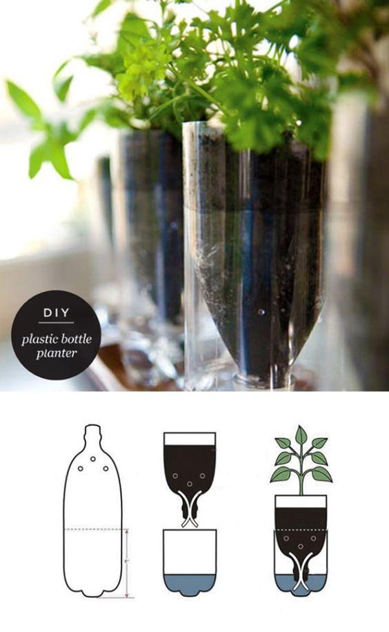 bottle plant1