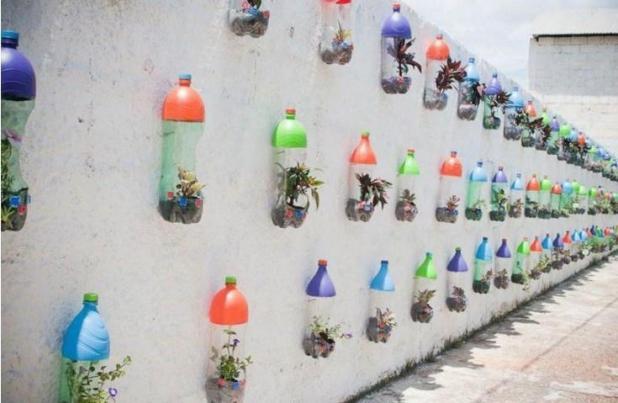bottle plant3