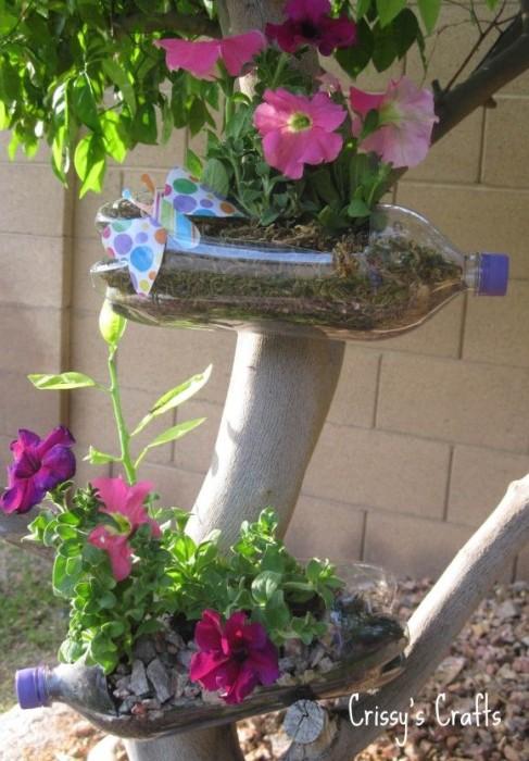 bottle plant5