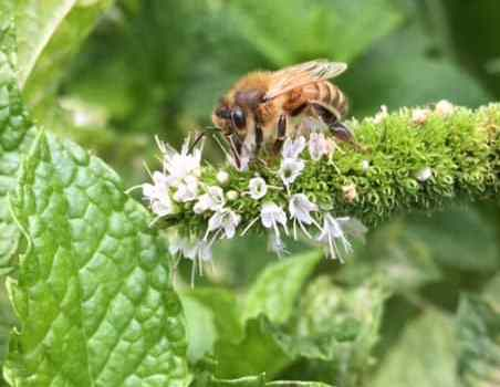 How to help the bees without keeping a hive