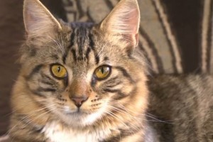 Star: Mittens the hermaphrodite cat