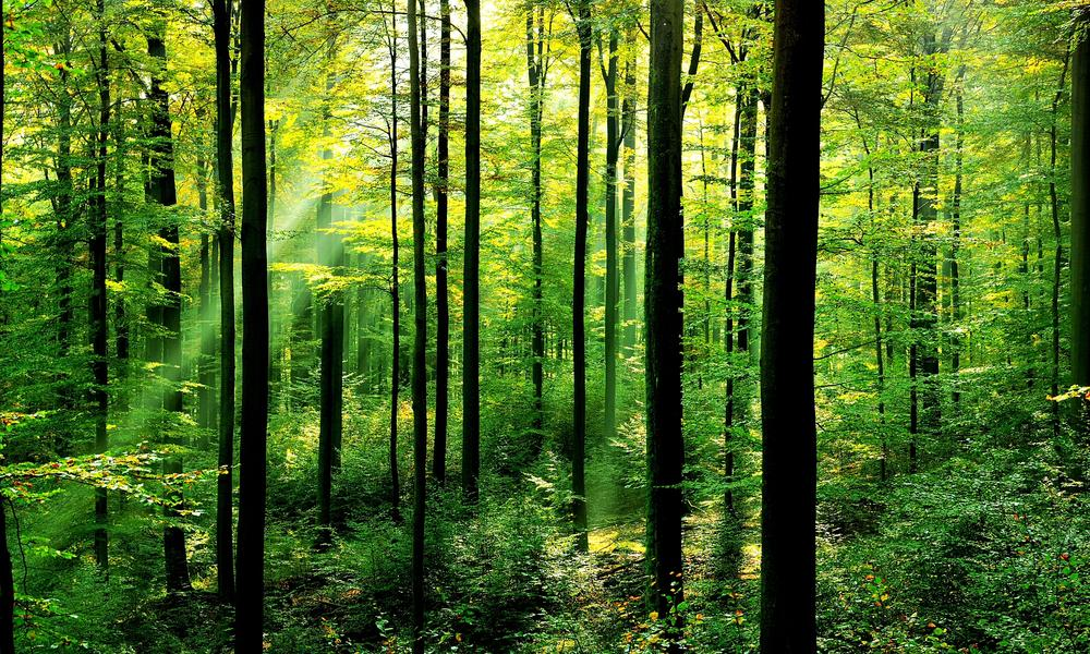 forests-why-matter_63516847