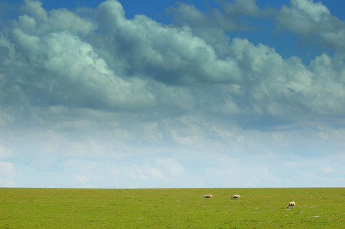 Sheep and Sky