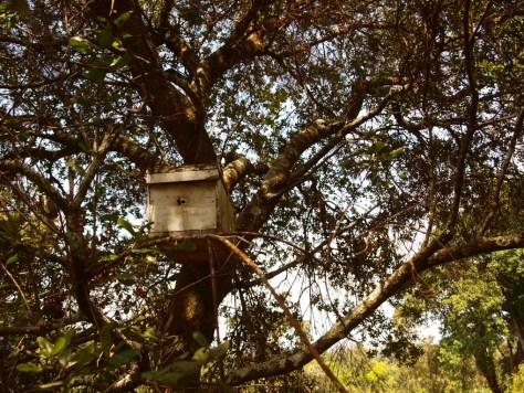 Eigentlich beschäftigt sich Aloice hauptsächlich mit Bienen. Er geht regelmäßig ins Gelände und hängt Kästen für stachellose Bienen auf.