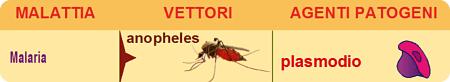 malaria plasmodio anofele zanzara