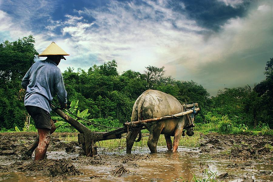 Mengenal Aset untuk Kesejahteraan Desa – Berdesa