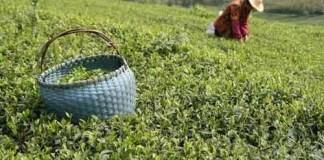 Tujuh Produk Indonesia Jawara Dunia