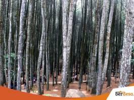 Bertualang di Sejuknya Hutan Pinus Dlingo
