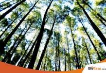 Harga Tiket Masuk Hutan Pinus Mangunan