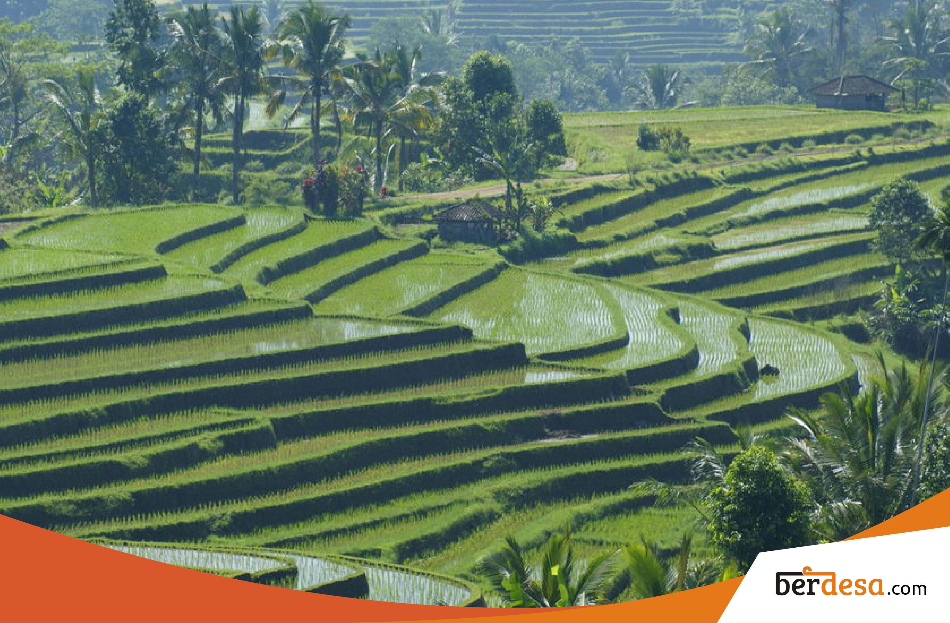 Informasi Mengenai Desain Pertanian Subak Yang Menguntungkan Petani – Berdesa