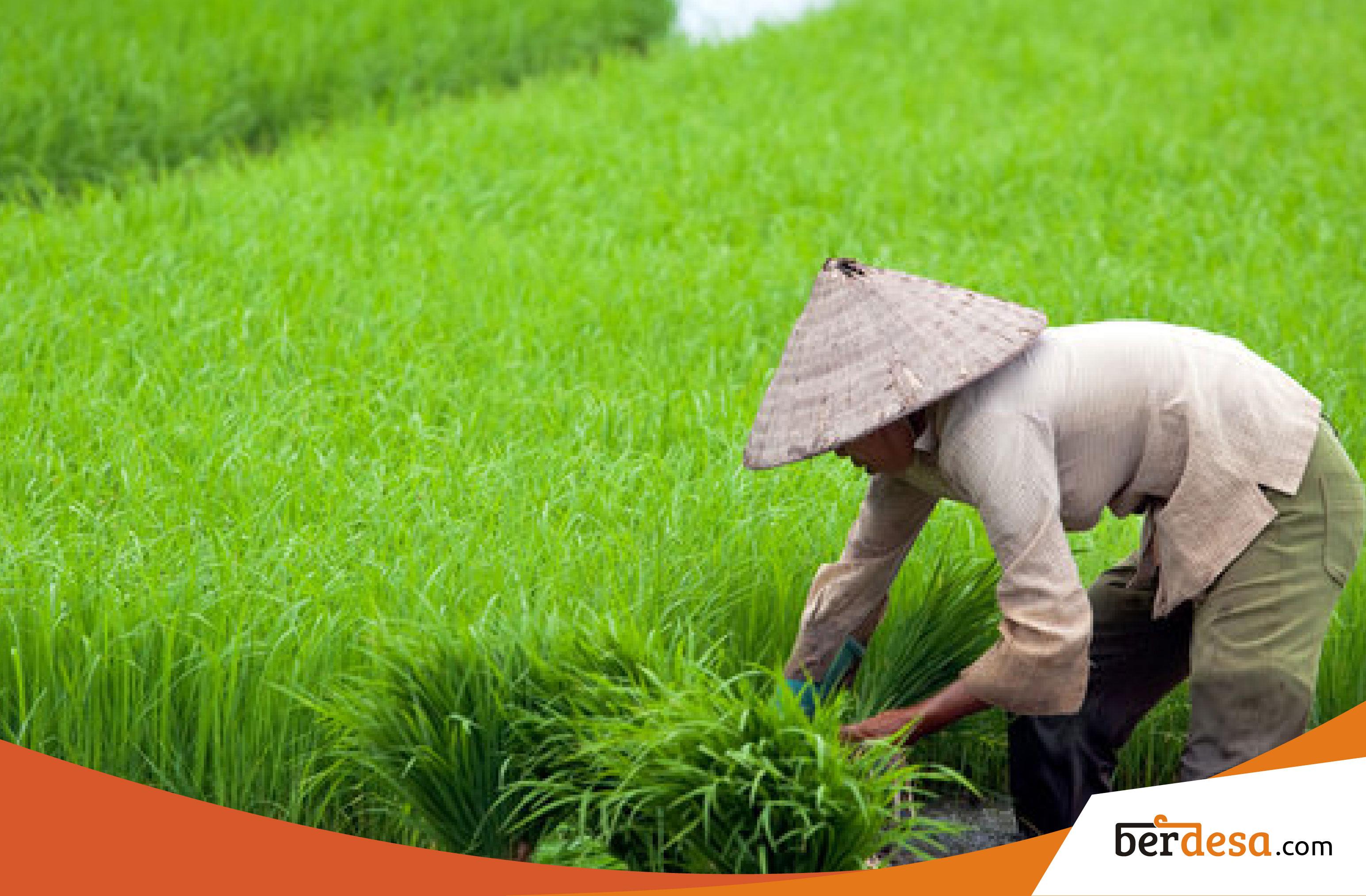 Upaya Untuk Meningkatkan Hasil Pertanian Di Desa Terpencil – Berdesa