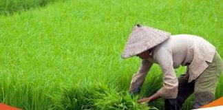 Upaya Untuk Meningkatkan Hasil Pertanian Di Desa Terpencil