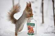 Возрадуйтесь, трезвенники Бердичева, ибо цена на водку в городе скоро взлетит до небес!