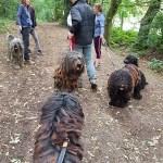 The dogs enjoying a walk