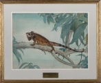 "<h5>""The Iguana"" by Charles Chapman (1957)</h5><p>Approx. 22""x30""; Watercolor BMAS 1163</p>"