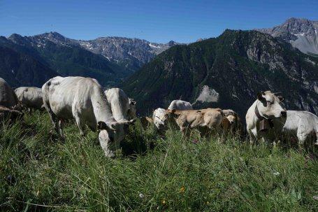 Wanderwoche Valle Maira / Kühe