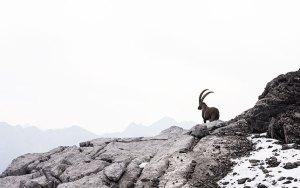 Wandern Nordic Walking Laufen in Lech am Arlberg Bergland Appartements