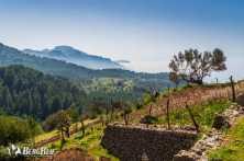 Wandern auf Mallorca Trockenmauerroute GR 221