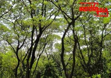 JAKARTA akan jadi Taman terbuka Hijau,
