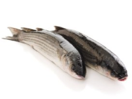 Dangerous Food - Grey Mullet