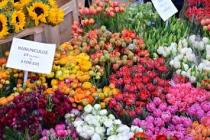 Columbia Road Flower Market 3