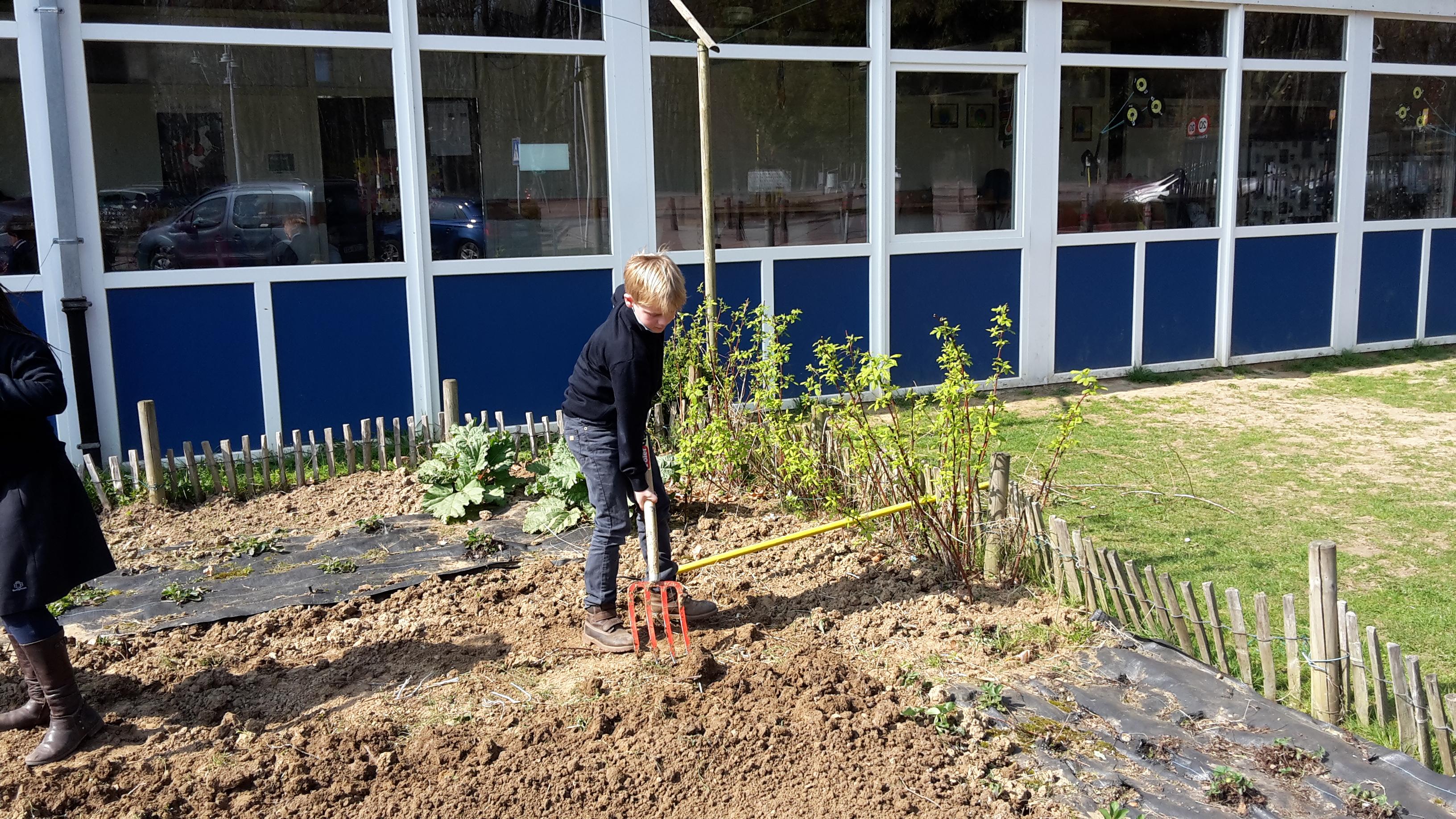 C est le printemps notre potager reprend vie ecole - Il faut cultiver son jardin voltaire ...