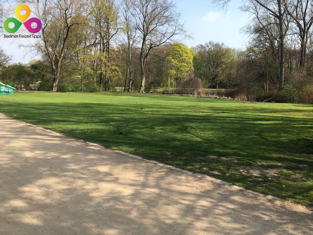 Bild Grünflächen im Tiergarten