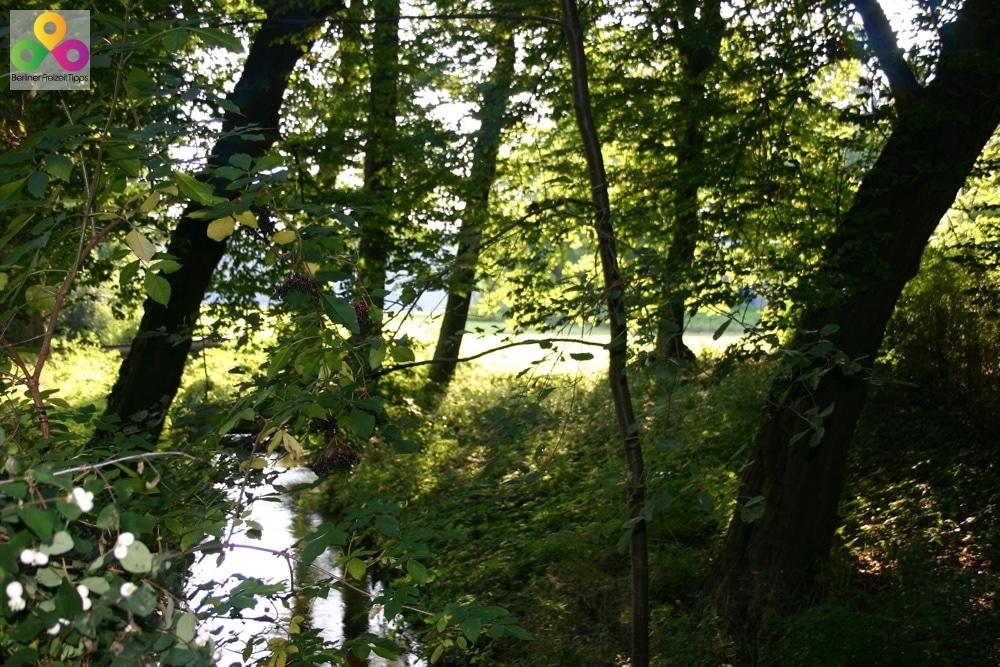 Bild-Wald-Geo Caching