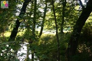 Geocaching in der Berliner Wuhlheide