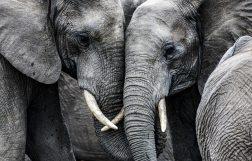 Tagestour zum Elefantenhof Platschow