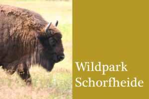 Bild Wildpark Schorfheide